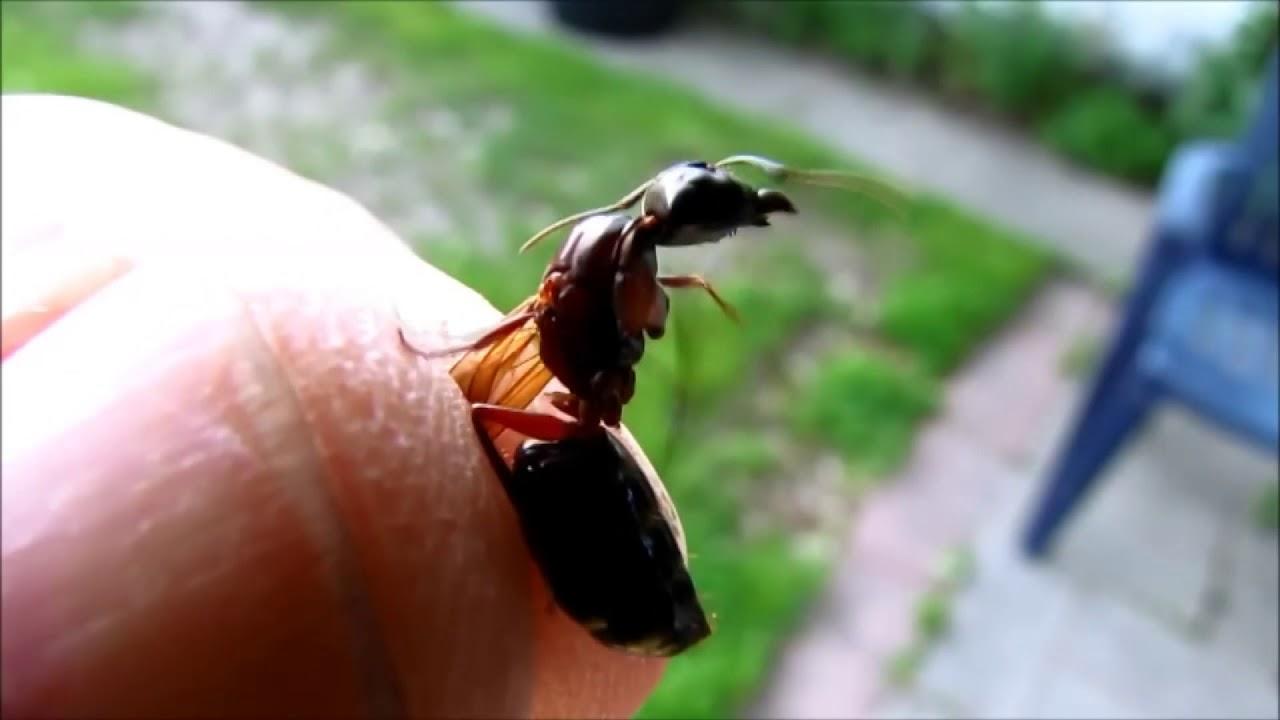 l 39 invasione di formiche con le ali youtube