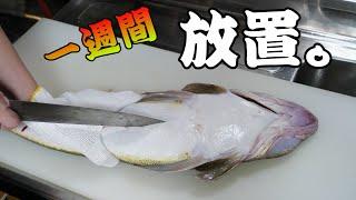 『夏のフグ』と呼ばれる、さばく難易度SSクラスのワニにような魚『マゴチ』を熟成して食べるよ!