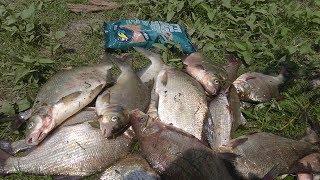 Лещик  не давал скучать!!! Рыбалка на фидер в июне р.Десна