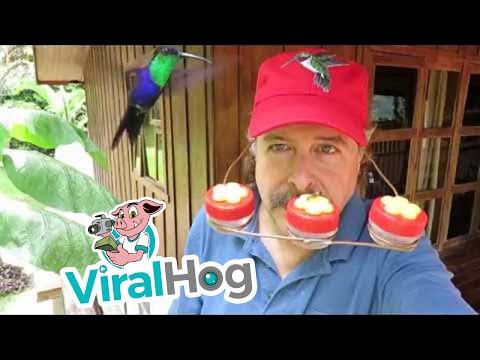 Humming Bird Hat Has Real Appeal || ViralHog