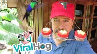 Humming Bird Hat Has Real Appeal    ViralHog