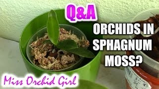 Q&A - How do nurseries grow Orchids in sphagnum moss?