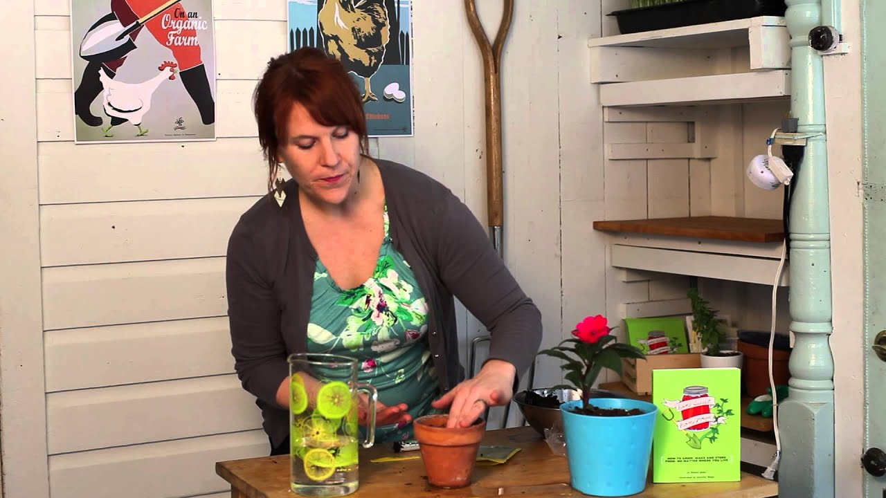 how to plant seeds in containers for winter flowers indoor
