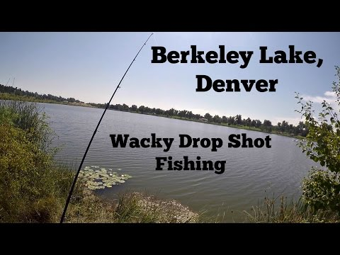 Bass Fishing Berkeley Lake, Denver - Wacky Drop Shot