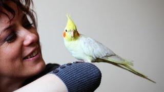 Do Birds Cause Allergies? | Pet Bird