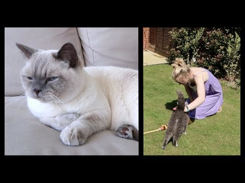HOW TO KEEP PETS COOL IN A HEATWAVE   CHRIS & EVE