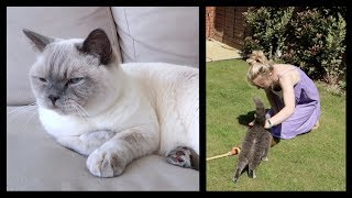 HOW TO KEEP PETS COOL IN A HEATWAVE | CHRIS & EVE