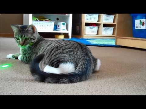 Kitten Chases Laser