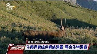 台灣自然生態影片 拍出棲地破碎化問題 20171201 公視晚間新聞