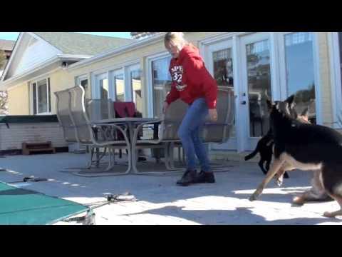 GSD puppy with hip dysplasia