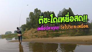 ตีชะโดเหยื่อสดปลาดุก!! ตกปลาชะโดหน้าดินแม่น้ำ (เบ็ด 2 คันวิ่งซ๊ะหอบ!!)