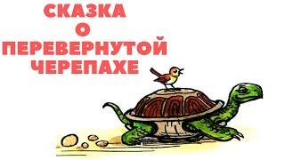 Сказка о перевернутой черепахе | Аудиосказки перед сном | Аудиокниги с картинками