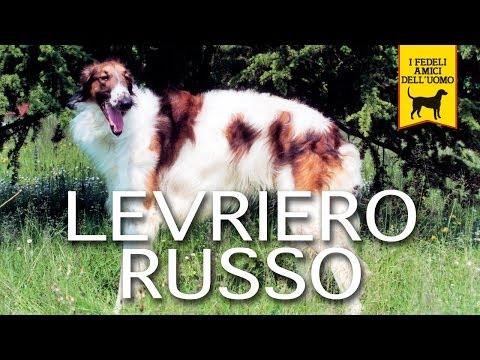LEVRIERO RUSSO trailer documentario