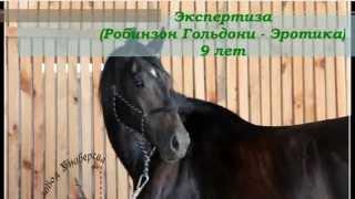 Экспертиза (Робинзон Гольдони - Эротика), 9 лет