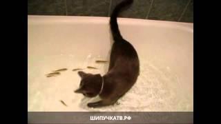 Кот в ванной ловит рыбок(Кот домашний средней пушистости. Меня интересуют только мыши, их стоимость и где приобрести. ~ Кот. Уж если..., 2014-10-21T20:25:15.000Z)