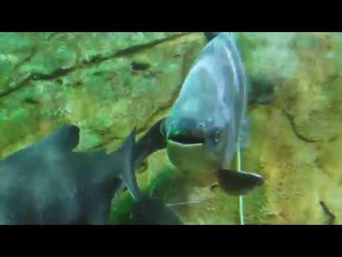Bể cá cảnh siêu đẹp hiếm thấy tại Việt Nam