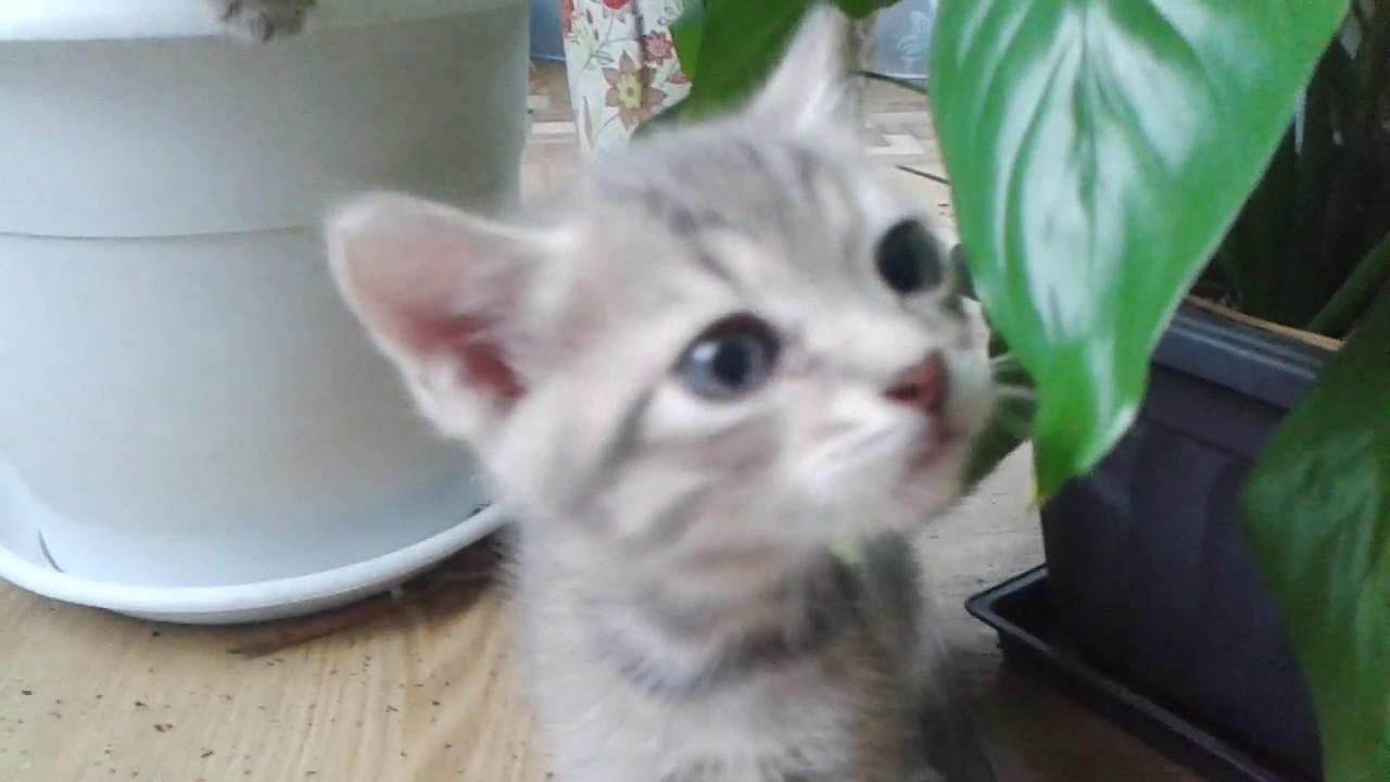 Котята авито - YouTube