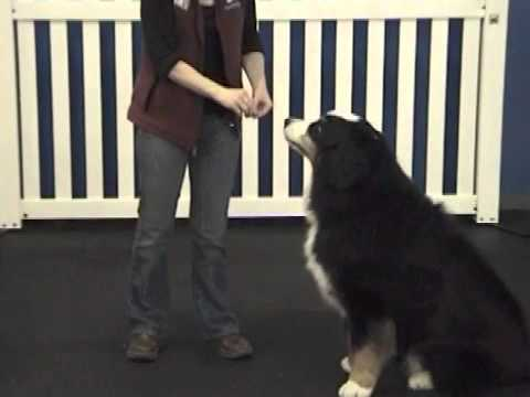 Luring Dog Training