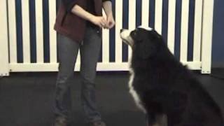 Positive-reinforcement Dog Training: How To Teach Sit And Down Using Lure And Reward