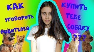Как уговорить родителей купить тебе собаку\ by Катерина Блинова