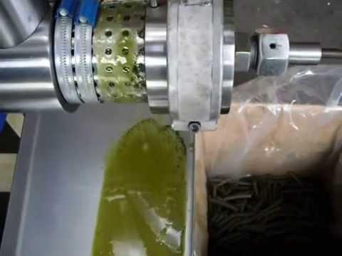 Hemp Seed Oil Mechanical Pressing Olio Semi Canapa
