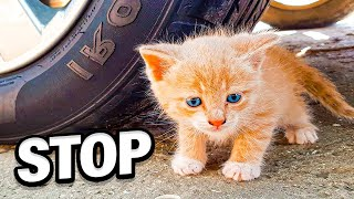 Stop This: BABY CAT VS CAR Videos