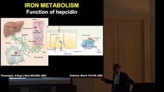 Yves Beguin: RÔLE DE L'HEPCIDINE DANS LE MÉTABOLISME DU FER ET L'ÉRYTHROPOÏÈSE