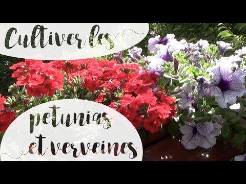 Cayennas Gang Toutes Les Fleurs