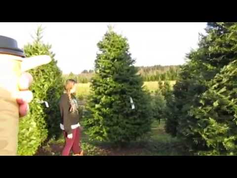 Cutting Our Own Christmas Tree..