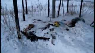 Найдена гора трупов кошек и собак на свалке