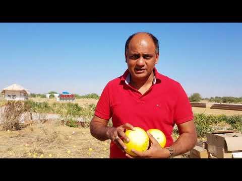 Citrullus colocynthis (Bitter apple) - Ayurvedic properties, Medicinal uses & Health benefits