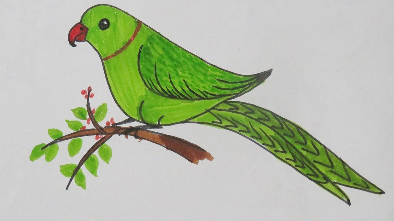 How to draw smiling parrot simple nature drawing very easy step of drawing for kids