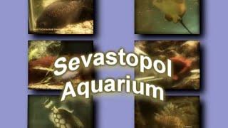 Sevastopol Aquarium(В центре Севастополя, на берегу Артиллерийской бухты, расположено здание Института биологии южных морей..., 2009-09-23T21:20:15.000Z)