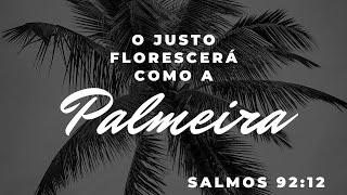 O JUSTO FLORESCERÁ COMO A PALMEIRA | REV. AMAURI OLIVEIRA | SALMO 92:12a
