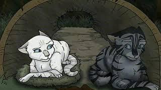 Коты воители из картинок!!!