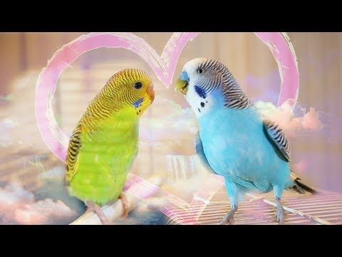 Budgie gets girlfriend for the first time | Vlog #3 Cookie