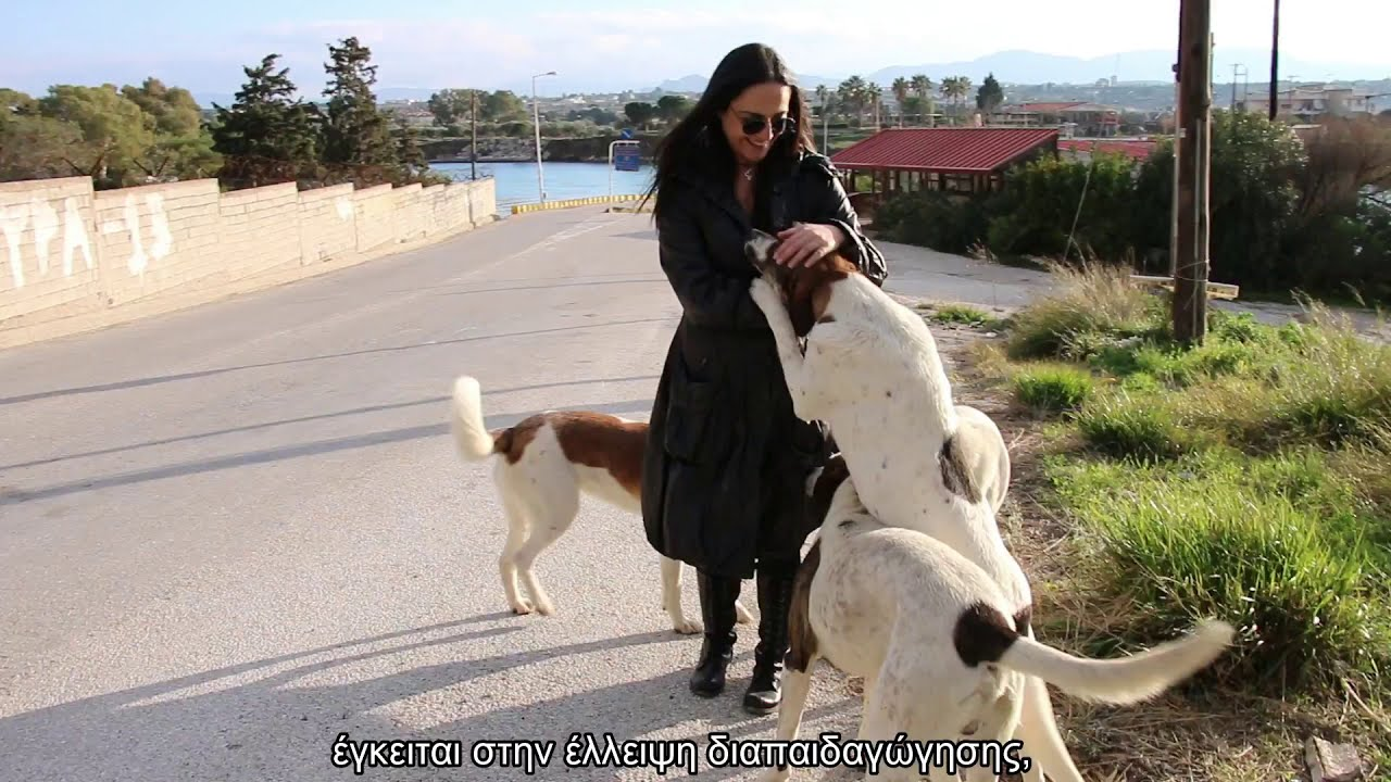 """Download Be part of our cause by supporting """"The Stray Story: A Dogumentary"""""""