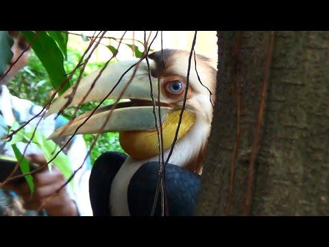 Dipelihara Warga, Burung Rangkong Dari TNGL Itu Disita Petugas