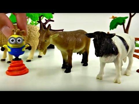 Çocuk Filmi - Minyon Bize çiftlik Hayvanlarını Anlatıyor