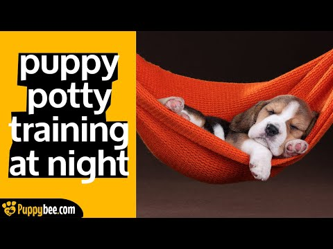 4 Tips for Potty Training a Puppy at Night (first few nights with your new puppy)