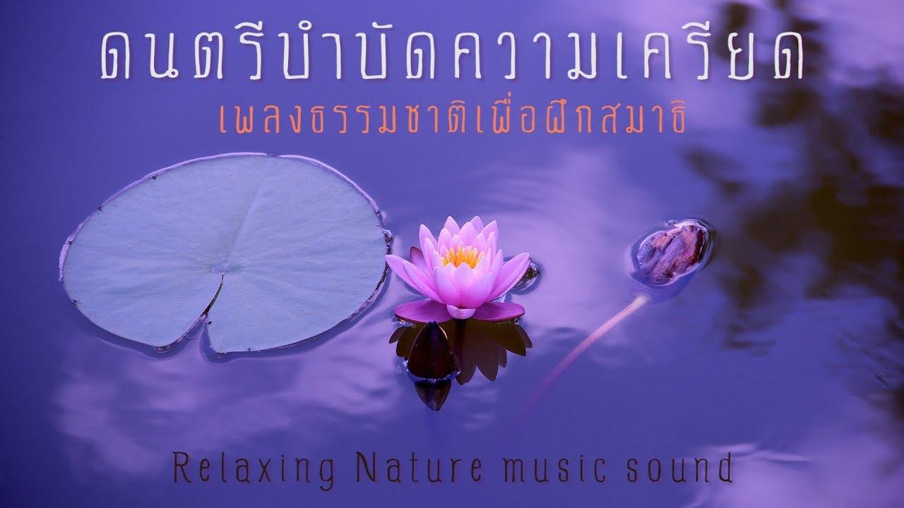 ดนตรีบำบัดความเครียด ผสานเสียงธรรมชาติ ช่วยให้จิตใจสงบ เยียวยาจิตวิญญาณ