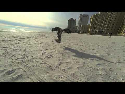 the glitch mob -  beyond monday  -- GoPro Edition --