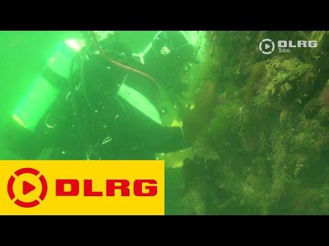 Einsatztauchen in der DLRG