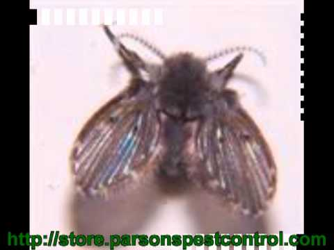 kill-flies-in-house