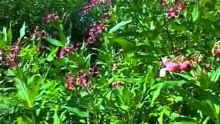 Распространение семян саморазбрасыванием