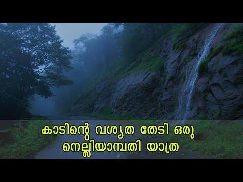 കാടിന്റെ  വശ്യത തേടി ഒരു നെല്ലിയാമ്പതി യാത്ര | A Trip to Nelliyampathy, Palakkad | Kerala Tourism
