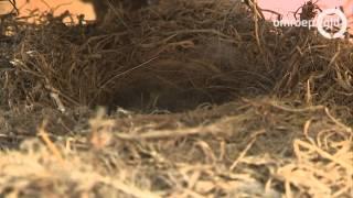 Vogels onder zadel trekker Hummelo