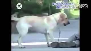 Собаки спасающие жизни...