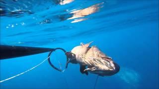 Mero  en Canarias (pesca submarina), jaime heras