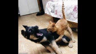 Афоризм от АЛЕКСАНДРА Кем лучше быть секс  собакой или кошкой  2018  Who better to be a dog or cat